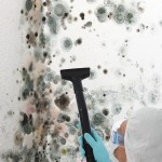 Black-Mold-Remediation-Federal_Way