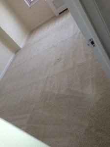 Federal_Way-Carpet-Clean-room