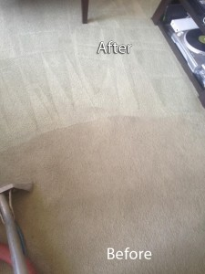 Federal_Way-Carpet-Cleaning-Company