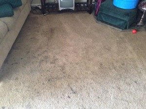 Federal_Way-Dirty-Carpet