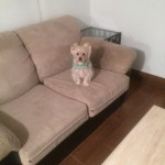 Federal_Way-Sofa-Pet-Stain-Cleaning