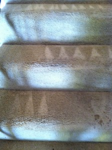 Federal_Way-Stairs-Carpet-Cleaning